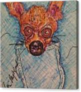 Chihuahua In A Pocket Canvas Print