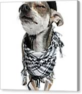 Chihuahua Wearing A Scarf And A Cowboy Hat Canvas Print