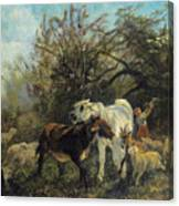 Child And Sheep In The Country Canvas Print