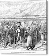 Chile: Wine Harvest, 1889 Canvas Print