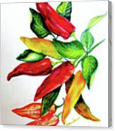 Chillies From My Garden Canvas Print
