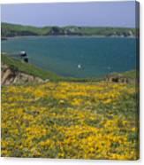 Chimney Rock Trail And Drakes Bay Canvas Print