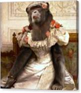 Chimp In Gown  Canvas Print
