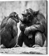 Chimpanzee Pair Canvas Print