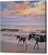 Chincoteague Horses Canvas Print