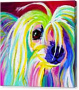 Chinese Crested - Fancy Pants Canvas Print