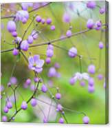 Chinese Meadow Rue Flowers Opening Canvas Print