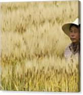 Chinese Rice Farmer Canvas Print