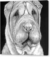Chinese Sharpei Canvas Print