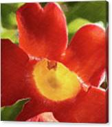 Chinese Trumpet Flower In La Mesa California Canvas Print