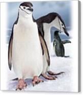 Chinstrap Penguins 2 Canvas Print