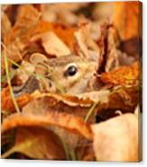 Chipmunk Among The Leaves Canvas Print