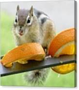 Chipmunk And Oranges 2 Canvas Print