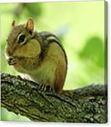 Chipmunk Cheeks Canvas Print