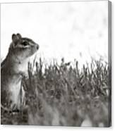 Chipmunk In Black And White Canvas Print
