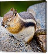 Chipmunk Canvas Print