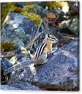 Chipmunk On The Rocks Canvas Print