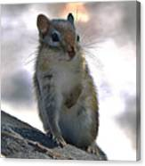 Chipmunk Up Close Canvas Print