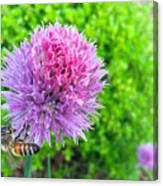 Chive And Bee Canvas Print