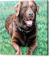Choco Labrador Canvas Print