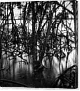 Chokoloskee Mangroves Canvas Print