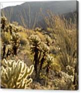 Cholla Cactus And Ocotillo Plants Canvas Print