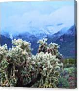 Cholla Cactus And Superstition Mountains Canvas Print