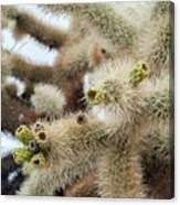 Cholla Cactus Garden Closeup Canvas Print