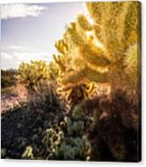 Cholla Cactus Canvas Print