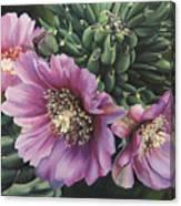Cholla Flowers Canvas Print