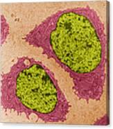 Chondrocytes, Tem Canvas Print
