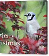 Christmas And Blue Jay Canvas Print