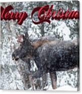 Christmas Bull Moose Canvas Print