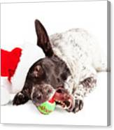 Christmas Dog Chewing On Tennis Ball Canvas Print