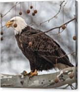 Christmas Eagle Canvas Print
