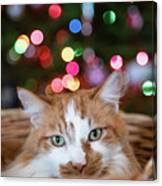 Christmas Kitty In A Basket Canvas Print