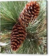 Christmas Pine Cones Canvas Print