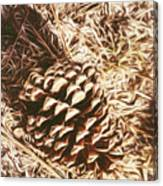 Christmas Pinecone On Barn Floor Canvas Print