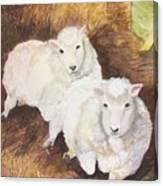 Christmas Sheep Canvas Print