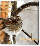 Christmas Sparrow - Christmas Card Canvas Print