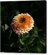 Chrysanthemum Fire 09 Canvas Print