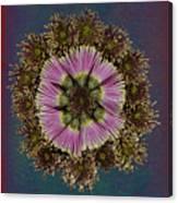 Chrysanthemum Mandala Canvas Print