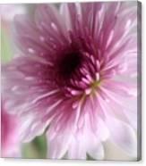 Chrysanthemum #001 Canvas Print
