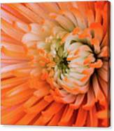 Chrysanthemum Serenity Canvas Print