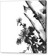 Chrysanthemum Stone 2 Canvas Print