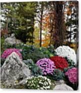 Chrysanthemums In The Garden Canvas Print