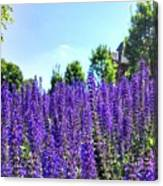 Cincy Flower Field Canvas Print
