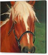 Cinnamon The Horse Canvas Print
