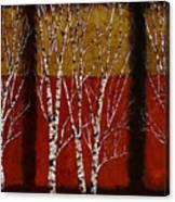 Cinque Betulle Canvas Print