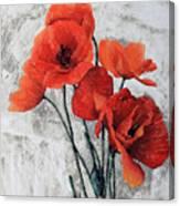 Cinque Papaveri Canvas Print